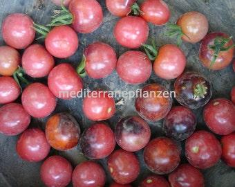 NEW VERIETY 2015/16 Indigo Cherry Drops, stunning tomato! 20 seeds