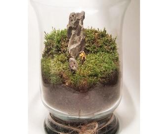 The wanderer . Terrarium. Live moss. Hiking scene