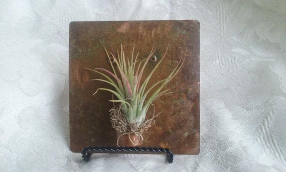 """Metal Wall Art 4.5"""" Copper Tile Air Plant Holder with Easel"""