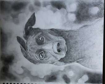 Dog Graphite Drawing