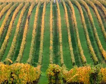 Wine Country Oregon