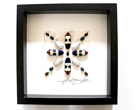 Artframe with real insects : Topquality fantasy with beautiful mosaic with jewelbeetles FREE SHIPPING