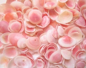 "Rose Cup Seashell 0.5-1""-set of 50-Craft Seashells-Small Seashells Bulk-Beach Wedding Decor-Seashells Supplies-Tiny Seashells-Small Shells"