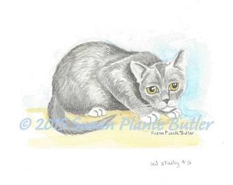 cat study # 5 - grey cat  crouching