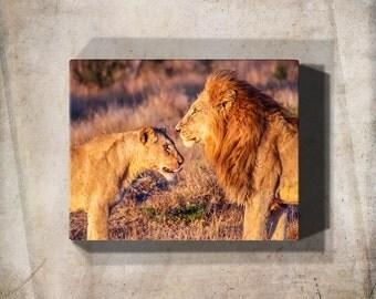 Canvas Wall Art, Metal Wall Art, Lion Art, Lion Print, Large Canvas Art, Fine Art Print, Wildlife Print, Wildlife Photography, Ready To Hang