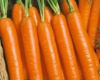 Carrot Little Fingers-Gourmet 300+ seeds