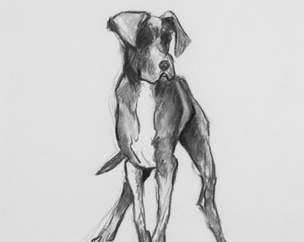 "Great Dane Drawing - ""Jeffrey"""