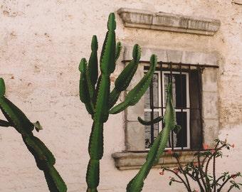 Cactus Photography, Cactus Picture, Cactus Photograph, Southwestern Decor, Southwest Art, Southwest Print, Desert Art, Fine Art Photography