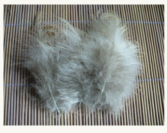 lot of 10 natural rare fluffy feathers D101