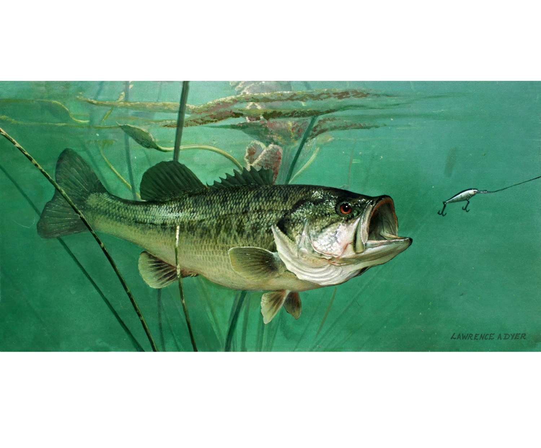 Largemouth bass giclee art print canvas from original painting for Bass fishing art