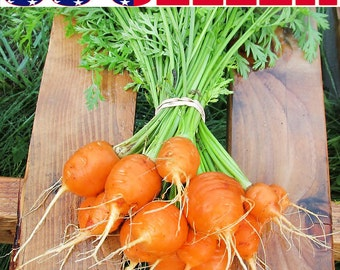 250+ ORGANIC Parisian Carrot Seeds Heirloom NON-GMO Paris Market Round