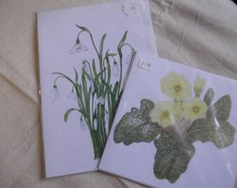 Botanicals in Coloured Pencils Primrose & Snowdrops