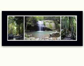 Sunshine Coast Rainforest Triptage