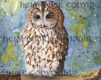Tawny Owl Watercolour Print