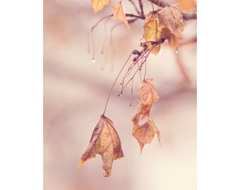 Nature Photography PRINT, Hanging Leaves, Wall Art