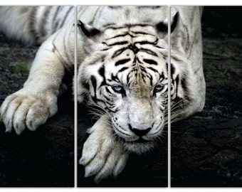 """3 Panel Photo of a White Tiger print on a Canvas. Stretched print on 1.5"""" deep frames.Great for home, office decor & interior"""