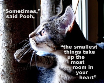 Cat Looking Out, Winne the Pooh quote