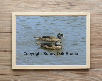 Photograph of grebes in a lake, grebes photo, birds photo, lake photo, water photo, animal photo, photo print