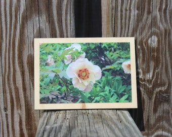 Photograph mounted on wood