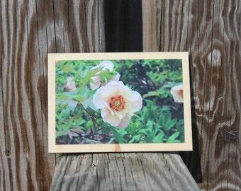 Photograph mounted on wood