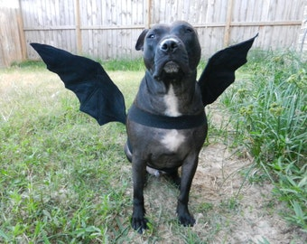 Bat Wings Dog Halloween Costume , Custom made to fit