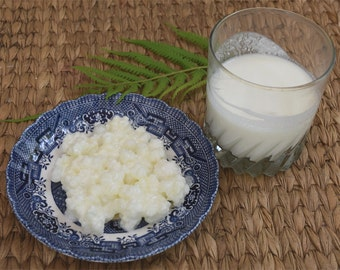 Organic Milk Kefir Grains - Live, a Symbiotic Culture of Bacteria and Yeasts. 1 tablespoon