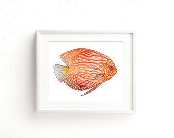 Orange Discus Fish Watercolor Fine Art Print