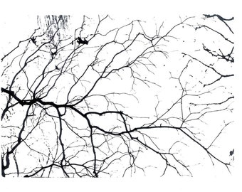 Branches - Black and White Film Photograph