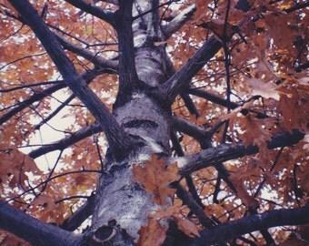 Nature: Up the Oak Tree