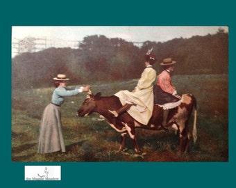 Vintage Postcard, Three ladies and a cow,  Harrodsburg, Kentucky. VB018