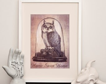 Taxidermy Owl - Home Sweet Home -  Art Print - Various sizes