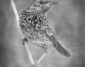 Little bird portrait by evgeniyfill82, 12 x 8 inch, graphite on the paper