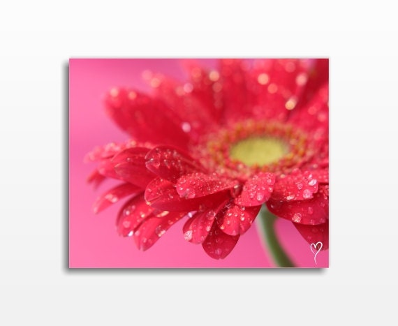 Red Canvas Art, Flower Canvas Prints, Daisy Canvas Wall Art, Flower Photography, Floral Canvas