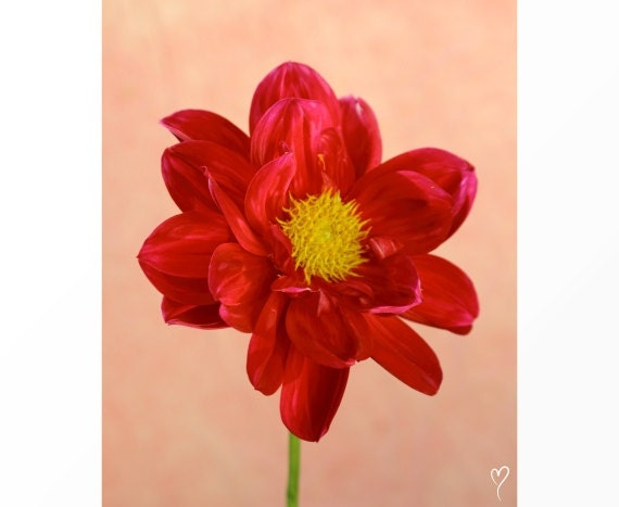 "Red Wall Art, Red Home Decor, Flower Wall Art, Flower Decor, Flower Photography, Red Flower, ""Portrait of Red Petals"""