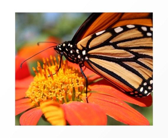 """Butterfly Wall Art, Butterfly Art Print, Butterfly Art, Flower Fine Art, Wall Art """"Hidden Sweet Nectar"""""""