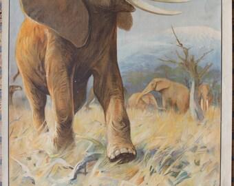 Vintage  Old School Chart Elephant  print