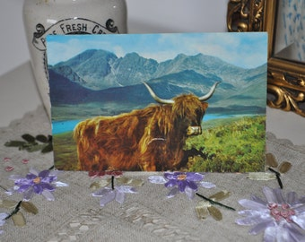 Vintage Scottish Highland Cow  Postcard Used. 1969. Scotland