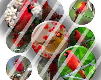 Digital Bottle Cap Collage Sheet -  Cardinals - 1 Inch Circles Digital Images for Bottlecaps