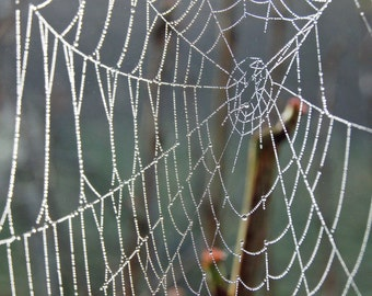 Cobweb Jewels