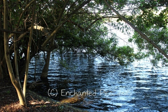 Lakeside Photography: Water's Edge- nature photography, trees, lake, reflection, water, shadows, shore