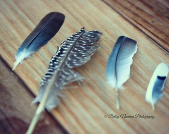 Feathers Photography Print Fine Art Photography wall decor Still Life Photography feather bedroom decor romantic nature