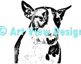Pattern Bull Terrier ©