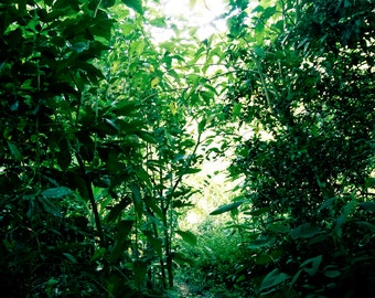 Small green road, close to the Brazil in agroforestry, nature and wild, colour photograph