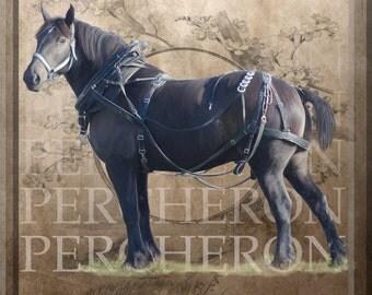 Percheron Draft Horse Work Decorator Giclee Print