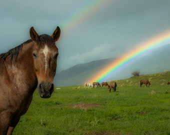 Rainbows and Ponies