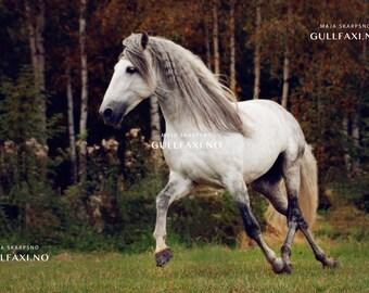 P.R.E stallion