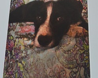 A4 Border Collie Photographic Art Print
