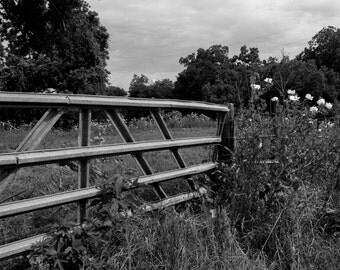 Entrance to Solitude, 8x12, by Ashley Lorehn