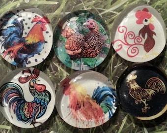I love chicken magnets