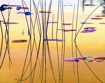 WATER AND REEDS Reflection